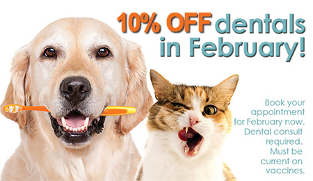 Pets Dental Health Months 450x260
